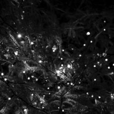 Advent: String Bright The Gray